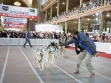 Dog Lovers Show 4